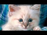 Милый кот под музыку песня из кф