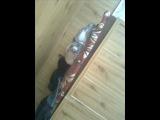 Олеся,с Днём Рождения от Даши Снегирёвой и от Саши-Фредди Галушка!я делала клип,фоты дяди Сашины_НОЛЬ - Песня про настоящего