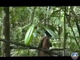 Ученые сняли на камеру жизнь дикого амазонского племени