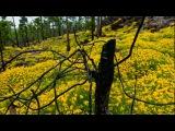 фотохудожник Терье Соргьерд, гора Тейде остров Тенерифе