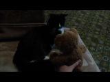 Кот Сэлем боится говорящего мишку)))