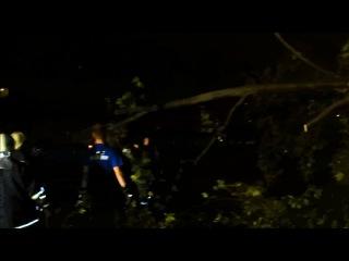 Спасатели распилили упавшее на дорогу дерево