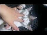 Two More Thumb-Sucking Kitties