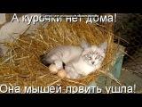 «Со стены Без кота и жизнь не та ツ» под музыку •••Юлия Савичева•••-Москва-Владивосток••• - Мне очень жаль...Моя любовь...Я точно знаю не забуду тебя...Мне очень жаль...И на восход...Я улечу в Москва-Владивосток...    Я очень сильно тебя люблю...И буду бороться за свои чувства...Забыть тебя я всё равно не смогу...Просто пр. Picrolla