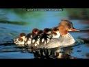 «Смешные животные!!!» под музыку Барбарики   - Песенка про друзей . Picrolla