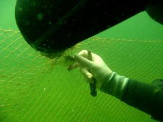Браконьерские сети в национальном природном парке Щацкие озёра
