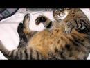 «котэ» под музыку Детские песни - Смешная песенка про кота, как мальчик хотел, чтобы кот стал большим и толстым, а в итоге получ