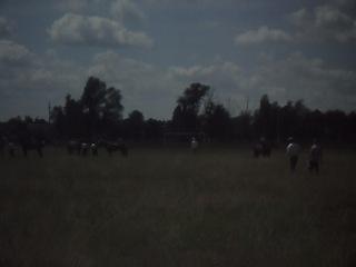 забег рысаков старшего возроста.сабантуй 2012г в Аксубаево.