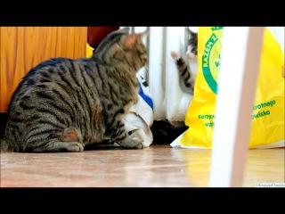 Котенок Против Робототехнической Собаки & Взрослый Кот(Кот Нападает)