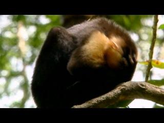 Животные похожи на нас / Animals Like Us - Часть 1. Медики