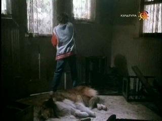 Новые приключения Лесси / The New Lassie 25 серия