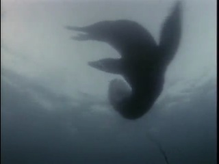 Подводная одиссея команды Кусто:  Живое море. 1970.