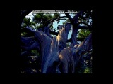 «Однажды в Крыму...» под музыку Александр Рыбак - Сказка. Picrolla