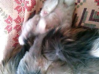 Няшный котёнок)))