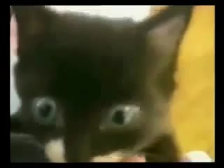 Эти смешные кошки- подборка приколов (LOLnet.ru)