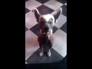 говорящая собака 2