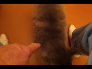 Кот по кличке Великан