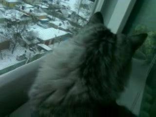 Скай искренне офигевает от того,что видит снег впервые