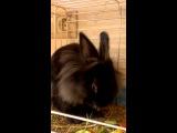 Кроликов заводят только ради этого...