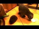 Кот, котик, смешно, прикол, ёж, ёжик, кот и ёжик, ржака, до слез, мило :)