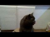 Котек и нори