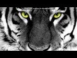 «Тигры!!!» под музыку Тимати и Богдан Титомир - Мой стиль называй меня мой тигр. Picrolla