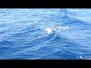 Дельфинчики Самые настоящие дикари =