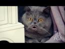 Поющий кот Сальвадор - 2 часть - Salvador singing cat - part 2