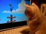 Котёнок смотрит мульт)))))