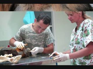 Врач-хирург ветеринарной медицины г.Киев в школе UShPO (vet)