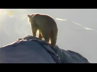 Планета Хищников: 3. Полярный медведь