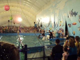 Песня дельфина и белых китов