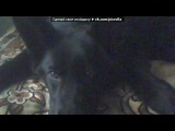 ГЕРМА_МОЯ СОБАКА под музыку Krec ft. Ассаи - Собака. Picrolla