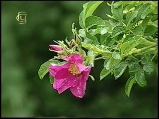 Систематика растений. Покрытосеменные