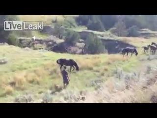 Парень прикоснулся к дикой лошади