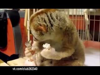 Стесняшка долгопят ест) приколы с животными