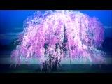 Внук Нурарихёна / Nurarihyon no Mago 1 сезон - 15 серия - Конкурентка, Изобилие Ста Цветов. [AniDUB]