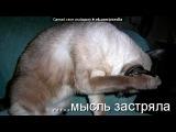 Приколы с котами под музыку дино мс 47 многоточие клубняк шансон ак-47 тимати сд минимал 2011 нтл баста гуф нагано домино аеее httpvkontakte.ru - Club 2010 httpvkontakte.ru#public24306991 подписывайтесь и добавь --httpvkontakte.ruid94107126--. Picrolla