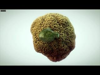 Самая мерзопакостная 3D модель в анимации