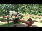 Паркур-собака