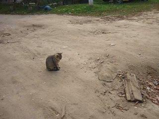 кого ловит кошка?