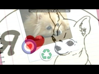 Собачий лай Я люблю Чихуахуа!