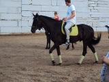 конь яша в стойке добермана
