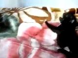 Щенок...НАПАДАЕТ !!! :D ахаха ! XD ( собака щенята кот коты котята няшки одержимый рычит Мопс дерутся смешные умные звери злая сабака пёс чёрный демон сатана бешенство )
