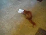 Кот и открытка
