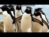 просто прикольные картинки под музыку DJ EMIGI - НУ ПОГОДИ!!! КЛУБНЯК 2011 КАЧАТЬ ВСЕМ. Picrolla