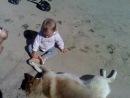 Дима Купавых 1 годик поближе знакомится с собачкой. Морозово-12.