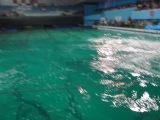 Дельфинарий на Крестовском