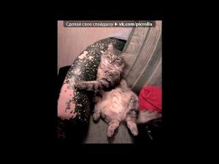 «Туапсе и мои Коты))» под музыку Дискотека Авария - Едем, едем в Польшу, в Украину. Picrolla