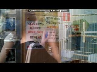 «5 Б и всё,что с ним связанно..» под музыку РЕП про ШКОЛУ!!! - 6Б(2011-2012). Picrolla